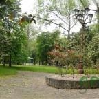 Paseo de los magnolios en el Parque de Alceda