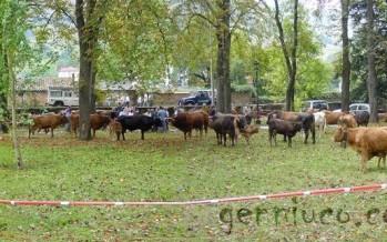 Feria ganadera 2012 en el Parque de Alceda