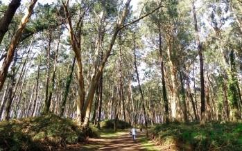 Un mágico día en de los pinares de Liencres