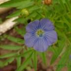 flores_verano_05