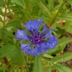 flores_verano_07