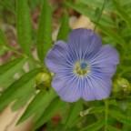 flores_verano_08