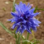 flores_verano_09