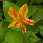 flores_verano_10