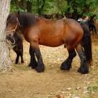Feria de ganado en el Parque de Alceda 2014