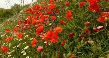 Las flores del campo en verano