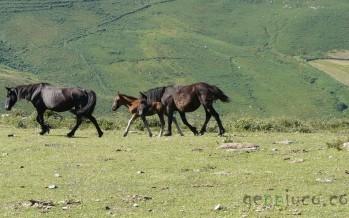 Una ruta por las montañas pasiegas: San Pedro del Romeral