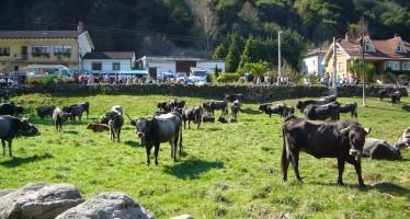 Feria exposición de ganado en Entrambasmestas 2011