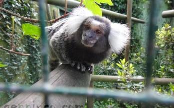 Zoológico de Santillana del Mar
