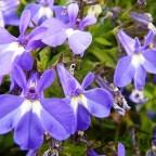 flores_verano3