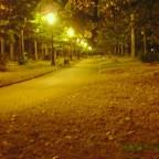 Paseo nocturno por el paseo de Los Tilos